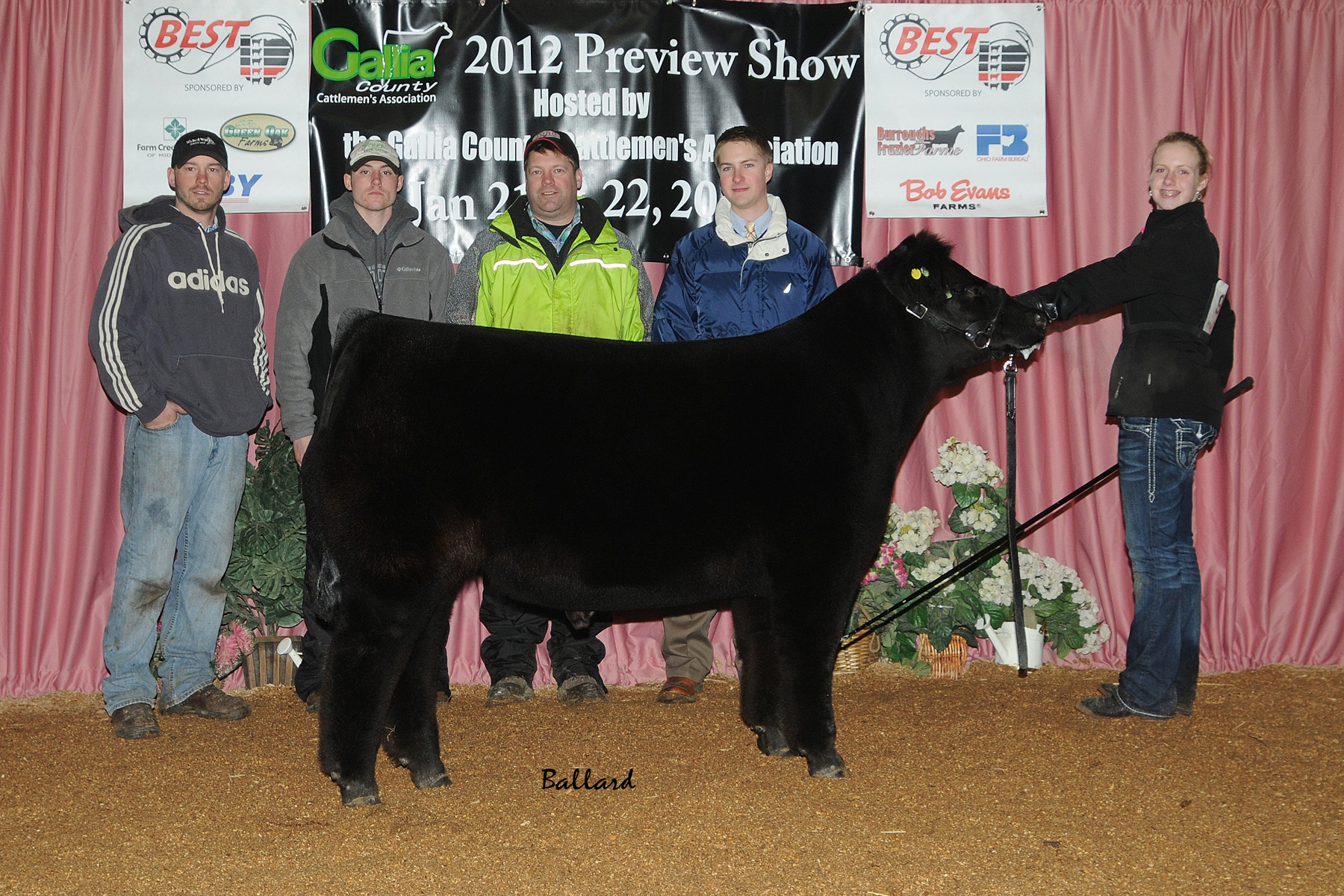 welcome to grauer show cattle many top five in ohio